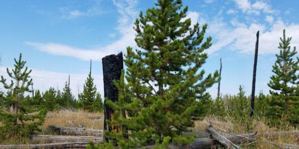 YellowstoneRenewal
