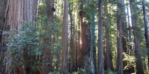 Old Growth Grove
