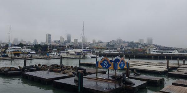 Pier39Seals